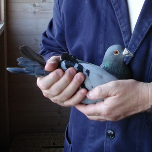 John Halstead with his Palamos bird square