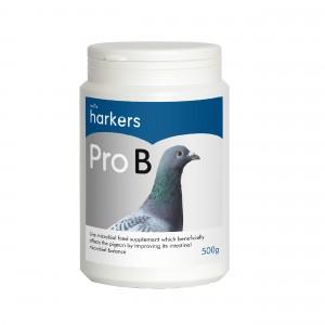 Pro-B