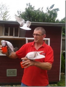 Paul Askew with his pigeons
