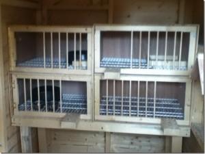 Paul Askew's nest box set up